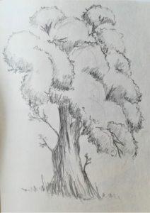 Kresba stromu tužkou